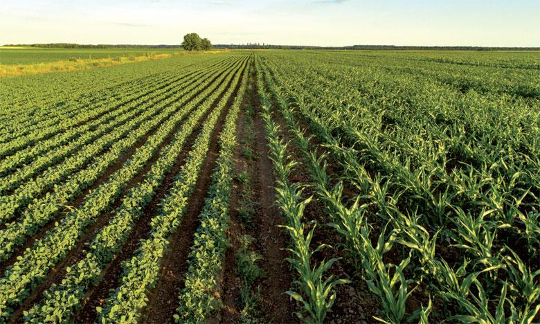 Pour l'heure, près de 54% de la main d'œuvre du continent concerne le secteur agricole en termes de moyens d'existence, de revenus et d'emplois. Ph. FAO