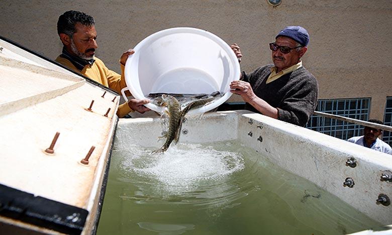 Un plan d'action spécifique dédié à l'encadrement et l'accompagnement des coopératives de pêcheurs artisanaux est prévu par l'ANDA. Ph : MAP