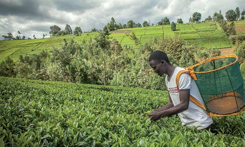 10 millions de dollars d'assurance pour les agriculteurs vulnérables africains et asiatiques
