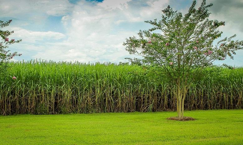 La saison agricole s'annonce sous les meilleurs auspices