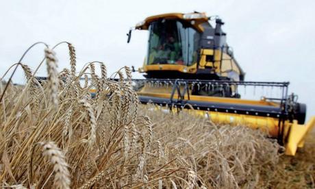 En raison de la hausse des températures, la production de blé en Afrique pourrait enregistrer  une baisse de 10 à 20% d'ici à 2030 comparé aux rendements des années 1998-2000. Ph. DR