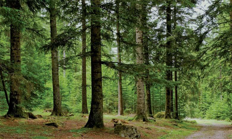 La DREF du Haut Atlas célèbre la Journée nationale  de l'arbre