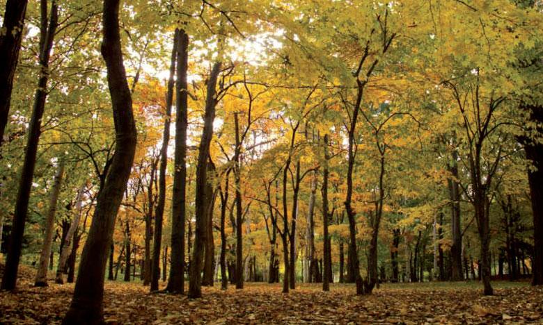 La nouvelle plateforme permettra d'améliorer la collecte de données sur l'état de santé des forêts.