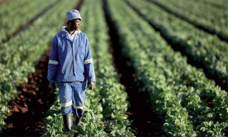 La FAO et AgriCord signent  un partenariat sur 5 ans