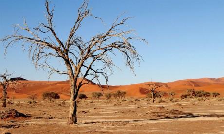 Les plantes, du fait de leur immobilité, sont les plus affectées par le changement climatique.Ph. DR