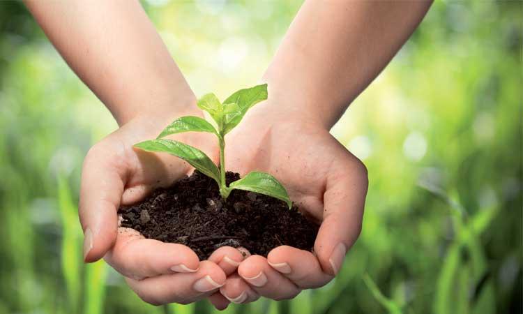 Un plan national pour adapter l'agriculture au changement climatique