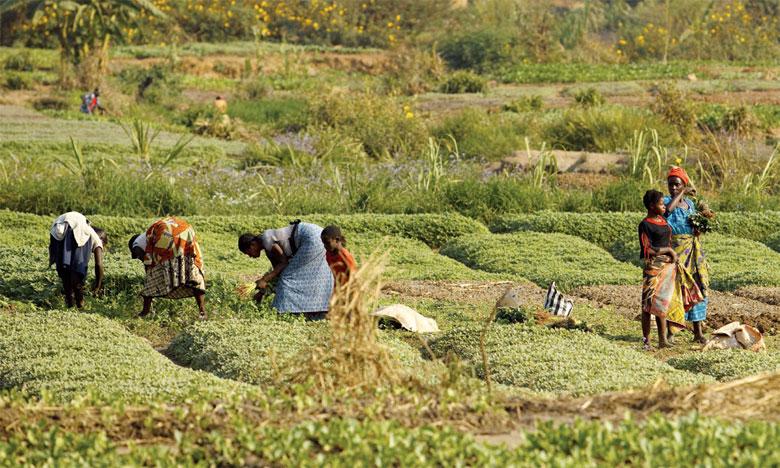 L'agroécologie peut contribuer à accélérer la réalisation du Programme de développement durable à l'horizon2030.                                                                               Ph. AFP