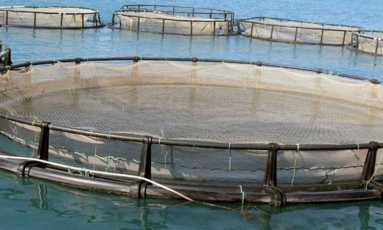 "Mbarka Bouaida : ""l'aquaculture, un secteur prometteur et d'avenir"""
