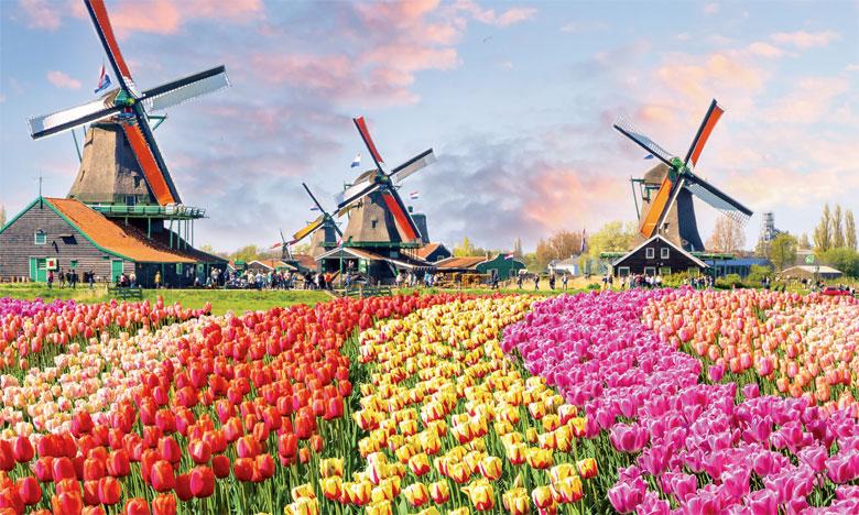 «Les Pays-Bas peuvent beaucoup contribuer au développement des secteurs de l'agriculture et de l'élevage au Maroc»