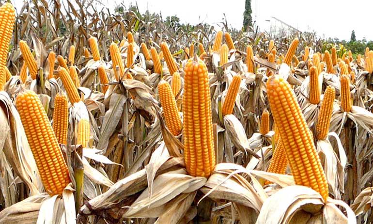 L'Indice de la FAO a augmenté  de 1,1% en mars