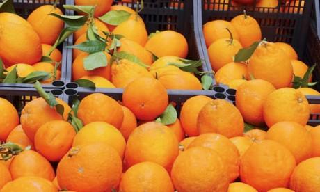 Autour de la Méditerranée, les agrumes risquent  de disparaître