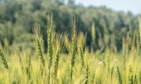 Plan Maroc Vert : Dix ans au service de l'agriculture marocaine