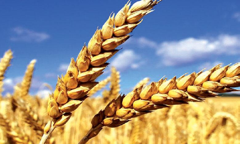 Le gouvernement met en place des mesures pour assurer les bonnes conditions de commercialisation de plus  de 98 millions de quintaux de céréales