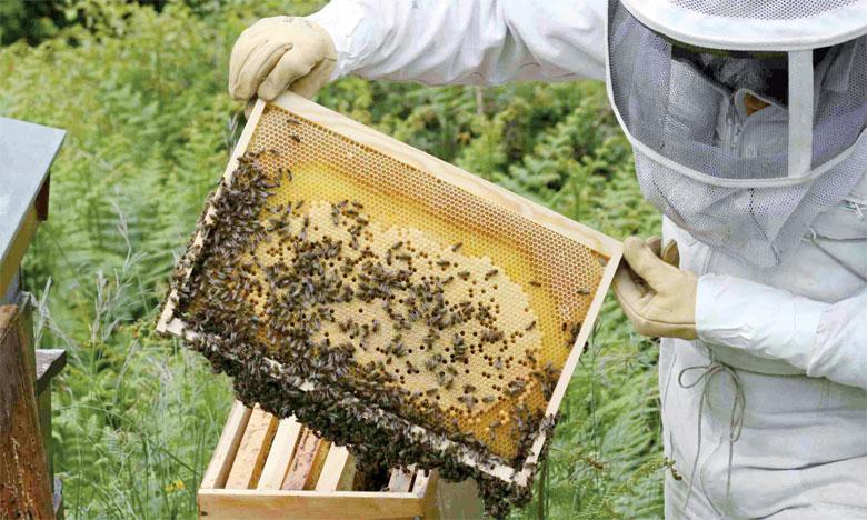L'absence d'abeilles et d'autres pollinisateurs réduirait à néant les champs de café, de pommes, d'amandes, de tomates  et de cacao. Ph. DR