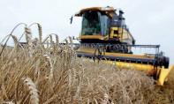 Augmentation à 135% des droits de douane sur l'importation du blé tendre