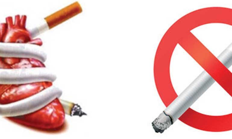 L'impact du tabagisme sur la santé du cœur mis en avant
