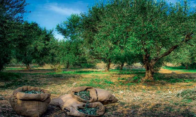 Durabilité alimentaire, le Maroc 29e  dans la régions de la Méditerranée