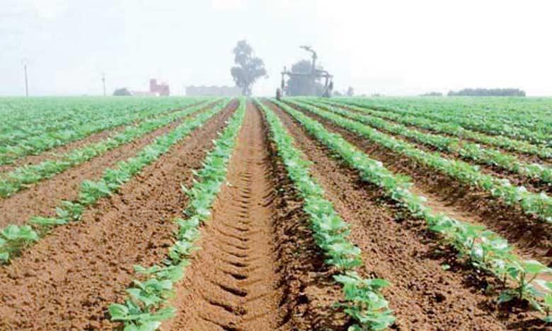 Dans la cadre de ce projet, l'État prévoit la mise à disposition des terrains agricoles au profit des investisseurs privés, à travers un processus d'appel d'offres.
