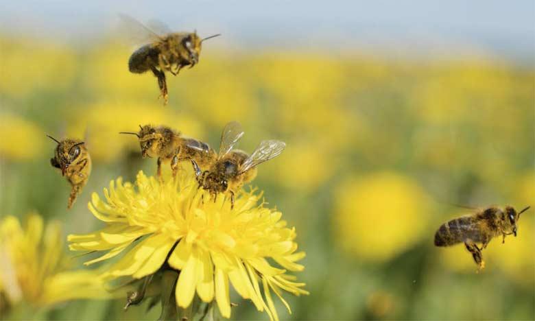 Les abeilles ainsi que d'autres insectes pollinisateurs permettent d'améliorer la production alimentaire de 2 milliards de petits agriculteurs dans le monde.