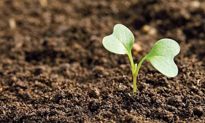 La pollution du sol entraîne une réaction en chaîne qui commence par une diminution de la biodiversité, réduit les taux d'incorporation de la matière organique et affaiblit la structure du sol et sa capacité à résister à l'érosion.