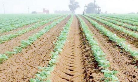 Le PADIDFA permettra de porter le niveau des exportations agricoles à 45 milliards de DH d'ici 2030 et d'économiser 990 millions de m3 d'eau.