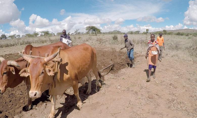 Les éleveurs recevront du fourrage et des animaux pour reconstituer leur cheptel face aux prévisions annonçant une hausse comprise entre 2 et 8% de la mortalité du bétail. Ph. DR