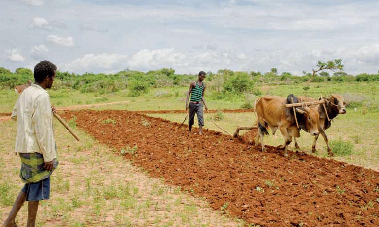 Les résultats des analyses du sol éthiopien permettront de créer un outil d'aide à la décision pour de meilleures recommandations d'engrais.