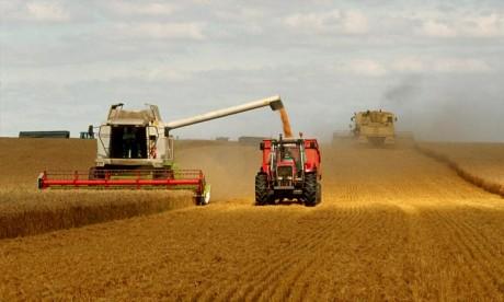 La production mondiale de blé va s'établir à quelque 754,1 millions de tonnes, en hausse par rapport aux prévisions du mois dernier. Ph : DR