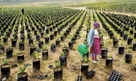 Près de 65% des terres cultivables en Afrique subissent des pertes en éléments nutritifs. «Afrisoils» recommande la rotation  des cultures pour éviter la fatigue des sols et de privilégier les engrais naturels.