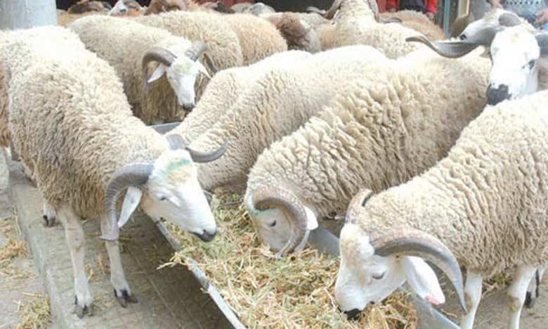 Les membres de l'ONV se sont engagés à sensibiliser leurs éleveurs à adhérer au programme de préparatifs de Aïd Al-Adha lancé par le ministère,  à renforcer le contrôle de l'usage et de la traçabilité des médicaments vétérinaires.