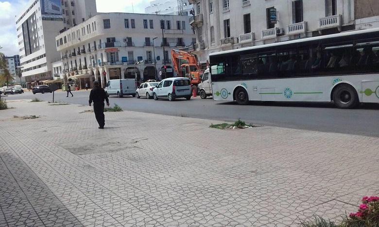 Le patrimoine vert de la Cité des marguerites à l'agonie