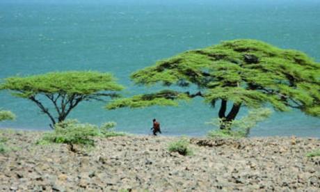 Le plus salé des Grands Lacs d'Afrique, le Turkana, est un laboratoire exceptionnel pour l'étude des communautés végétales et animales. Ph. DR