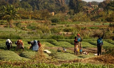 39 pays nécessitent une aide alimentaire externe