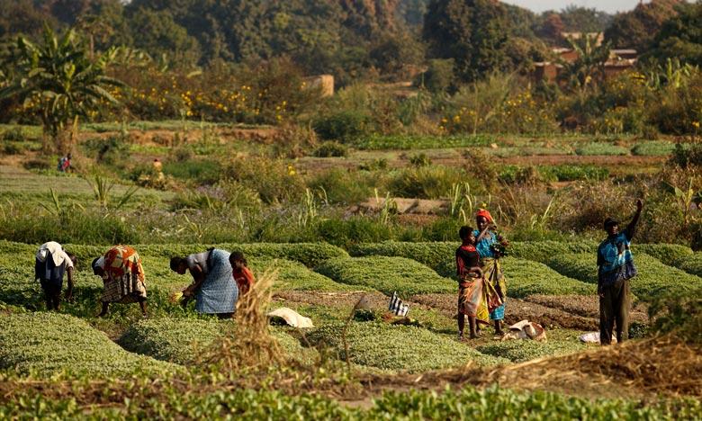 Les problèmes liés au pâturage et les répercussions du conflit sur le commerce de bétail contribuent à faire augmenter les souffrances liées à la faim chez les éleveurs ouest-africains. Ph : DR
