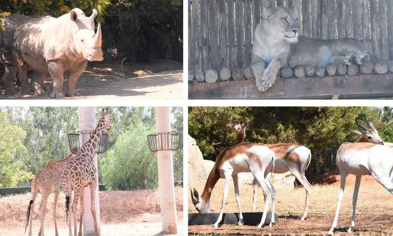 Au cœur du Jardin zoologique de Rabat
