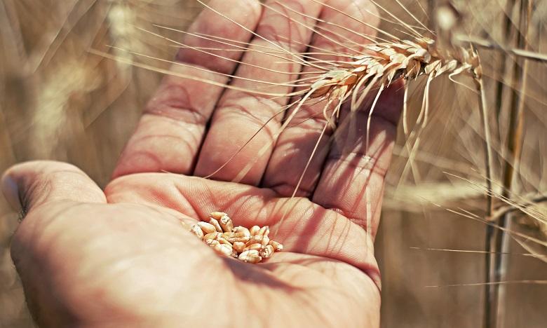 L'Indice FAO a augmenté de 1,2% en mai