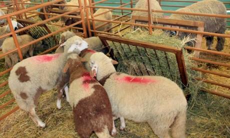 Les vétérinaires se mobilisent aux côtés de l'ONSSA