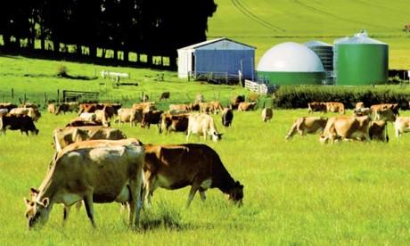 Les forêts, la production de nourriture et la terre  peuvent fournir jusqu'à 30% des solutions