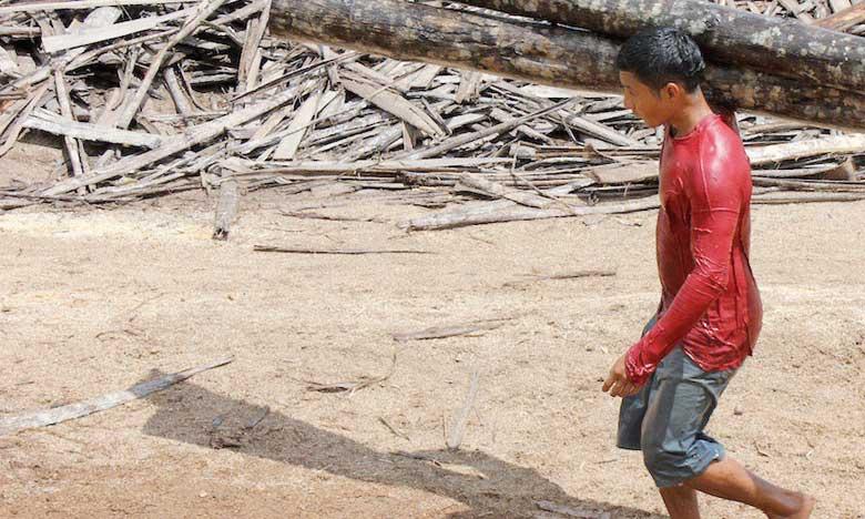 Lancement du «Mécanisme forêts et paysans»  au profit de millions de petits exploitants
