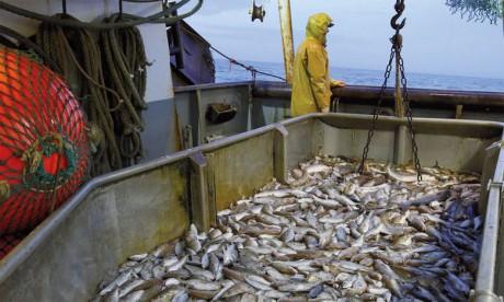 La pêche non durable représente 33% des stocks  disponibles