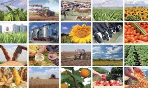 Agriculture : Cinq unités de valorisation en projet à Chefchaouen