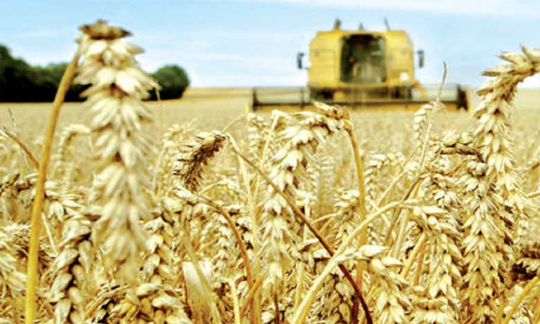 Une récolte de 103 millions de quintaux et un rendement record
