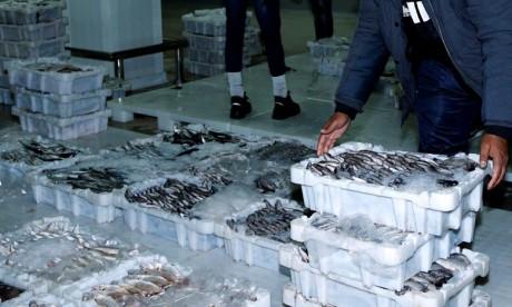 Un total de 10.495 tonnes des produits ont été débarquées dans les entrées portuaires méditerranéennes. Ph : MAP