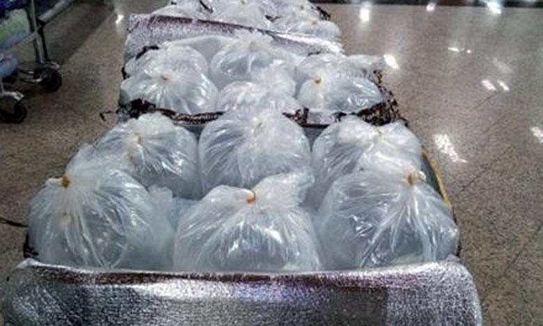 Les 78kg de civelles vivantes étaient dissimulés dans les valises de trois voyageurs. La pêche de ces alevins d'anguille est étroitement réglementée et l'exportation subordonnée à un permis délivré par le Haut Commissariat aux eaux et forêts. Ph. DR