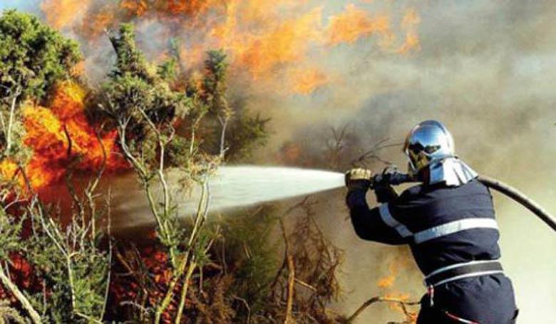 Incendie dans la forêt d'Ourika : plus de peur que de mal