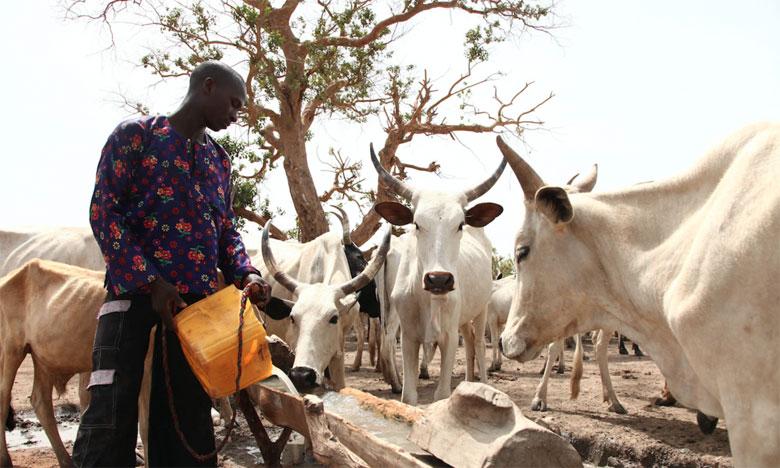 Les communautés agricoles et pastorales de Zamfara vivent depuis des années sous la menace constante des voleurs de bétail et des ravisseurs qui brûlent et pillent des villages, et enlèvent des habitants contre rançons.                                   Ph. AFP