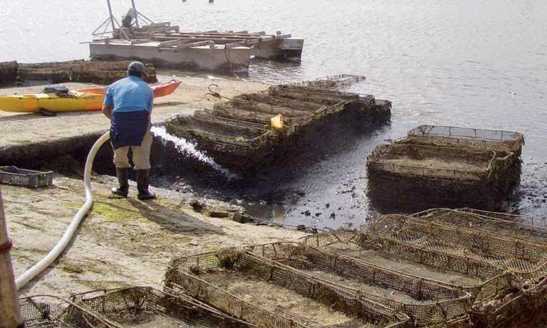 Festival des huîtres: Plaidoyer pour  la protection de la lagune d'Oualidia