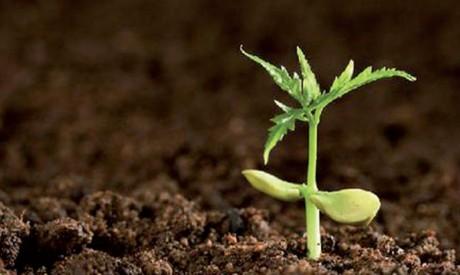 Un tiers des terres arables  dégradées