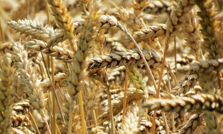 La sécheresse fait flamber les cours des céréales