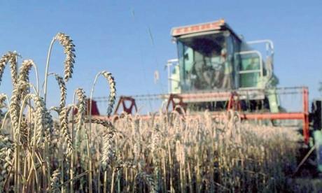 Le prix du blé flambe sur le marché  international